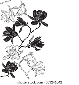 Branches with magnolia flowers on a white background. Floral vector background with space for text. Black and white greeting card or invitation.