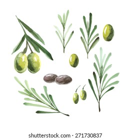 Branches of olive collection for your design. Decorative watercolor elements on white background.