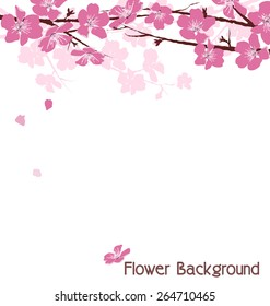 Branches with pink flowers isolated on white background
