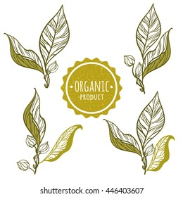 "The branches of plants with delicate leaves and buds. Stamp ""Organic"". Vector illustration."