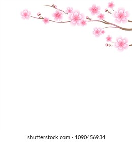 Branches of sakura with Pink flowers. Cherry blossom isolated on White background. Vector EPS 10 cmyk