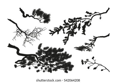 The branches of trees. Black silhouette on a white background. Drawing of pine, fir and cherry. Vector illustration