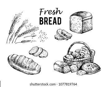 Bread vector hand drawn. Other types of wheat, flour fresh bread. bakery