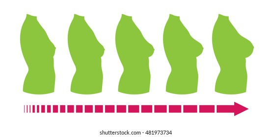 Breast size: female body silhouette, side view. Contour drawing of various boobs sizes, from small to large. Set of different sized busts. Vector isolated.