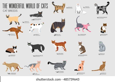 Vecto? breed cats icons set. Cute animal illustrations pet design . Collection different kitten layout flat cover