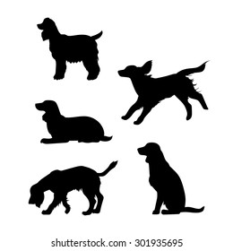 Breed of a dog Cocker Spaniel vector icons and silhouettes. Set of illustrations in different poses.