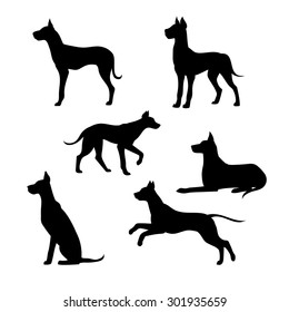 Breed of a dog great dane vector icons and silhouettes. Set of illustrations in different poses.