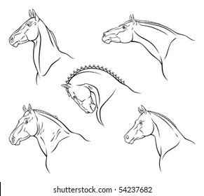 Breed of horse
