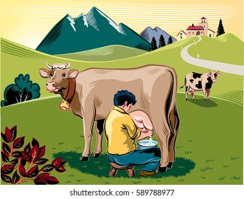 Breeder intent to milk a cow on a mountain meadow.