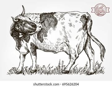 Cow Sketch Images, Stock Photos & Vectors | Shutterstock