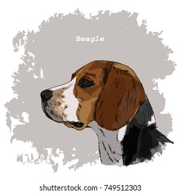 Breeds of dogs collection: Beagle. Hand drawn sketch of dog head, vector. Poster, postcard, calendar 2018