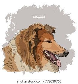 Breeds of dogs collection: Collie. Hand drawn sketch of dog head, vector. Poster, postcard, calendar 2018, t-shirt