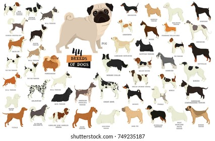 Breeds of dogs Isolated objects set