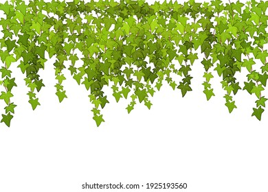 Сrawling up a brick wall of geen vine, liana or ivy hanging from above or climbing the home.Decoration for garden or home.