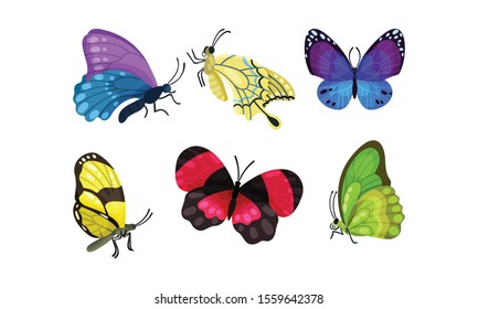Bright Beautiful And Colorful Tropical Butterflies Vector Illustration Set