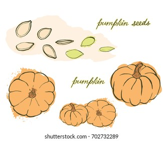 A bright card with hand drawn pumpkins and pumpkin seeds in warm tones isolated on white