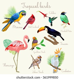 Bright color Exotic tropical birds set isolated.