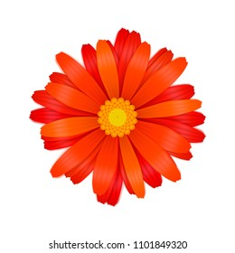 Bright colourful red gerbera flower isolated on white