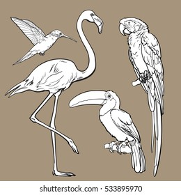 Bright exotic tropical birds - flamingo, macaw, hummingbird and toucan, set of sketch style vector illustrations isolated on white background. Set of hand drawn tropical birds