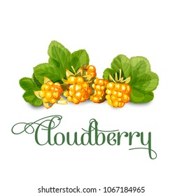 Bright juicy cloudberry. Sweet delicious for your design in simple cartoon style. Vector illustration.