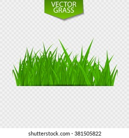 Bright Juicy Green Grass on a Transparent Background. Vector Illustration. EPS10