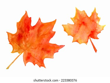 Bright orange watercolor autumn maple leaves isolated on white.