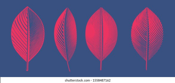 Bright red engraved vintage drawing leaves in various view glyph style illustration isolated on deep blue background