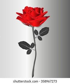 Bright red rose on gray stem isolated. Vector illustration. Wedding, birthday, Valentine's Day.