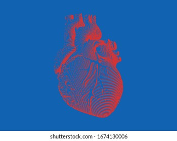 Bright red vintage engraved drawing abstract organ human heart in vector illustration with woodcut print style isolated on blue background