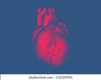 Bright red vintage engraved glyph drawing abstract organ human heart vector illustration dark woodcut style isolated on deep blue background