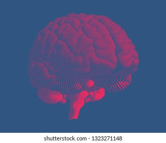 Bright red volume engraving human brain illustration  in perspective view isolated on dark blue background