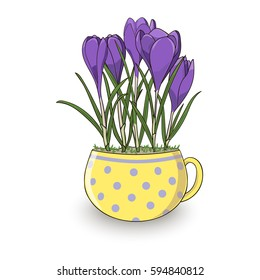 Bright spring violet crocuses in the cute yellow cup with polka dots.