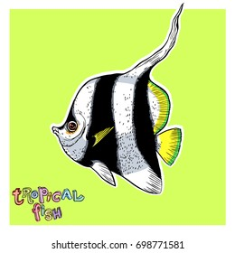 Bright tropical sea fish - vector hand drawing isolated linear illustration in sketch style