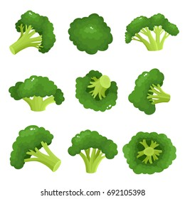 Bright vector collection of colorful broccoli. Fresh cartoon different vegetable isolated on white background used for magazine, book, poster, card, menu cover, web pages.