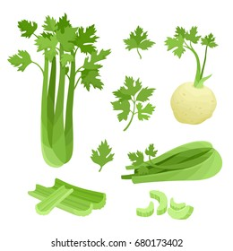 Bright vector collection of colorful half and whole of celery. Fresh cartoon different vegetable isolated on white background used for magazine, book, poster, card, menu cover, web pages.