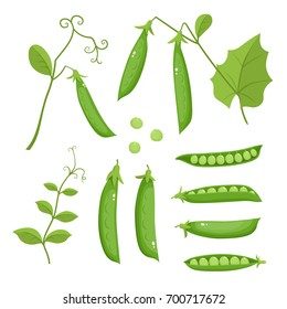 Bright vector collection of colorful peas. Fresh cartoon organic vegetable isolated on white background used for magazine, book, poster, card, menu cover, web pages.