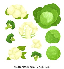 Bright vector illustration of colorful cauliflower, cabbage, broccoli. Fresh cartoon organic vegetable isolated on white background used for magazine, book, poster, card, menu cover, web pages.