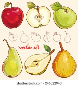 Bright vector illustration of fresh apples and pears. Single apple and pear, part of apple and pear, isolated, colored and outline drawing of fruits. Vector set with fresh apples and pears. eps 10