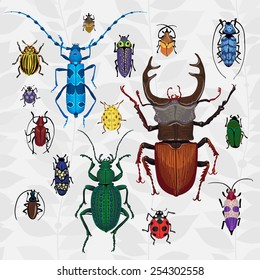 Bright vector set with colorful bugs. Drawing of beetles. Insect on the background with gray leaves. Cartoon bug illustration.