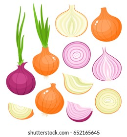 Bright vector set of colorful half, slice and whole of onion. Fresh cartoon vegetable isolated on white background. Illustration used for magazine, book, poster, card, menu cover, web pages.