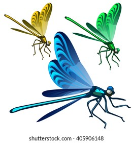 Brightly colored dragonfly. Insects isolated on white background. Vector illustration.