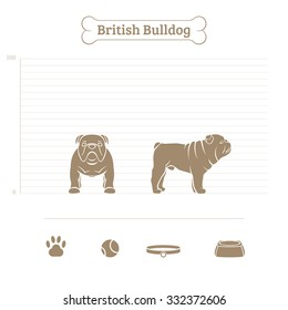British Bulldog on the dimensional scale. Items for dogs. Face and profile. Vector illustration.