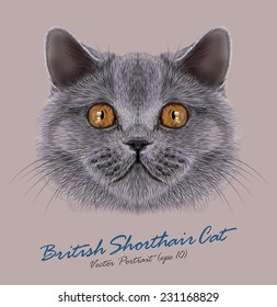 British shorthair cat animal cute face. Vector happy silver British kitten head portrait. Realistic fur portrait of British cooper eyes kitty isolated on grey background.
