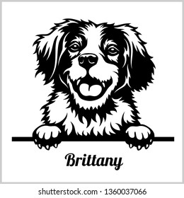 Brittany - Peeking Dogs - breed face head isolated on white - vector stock