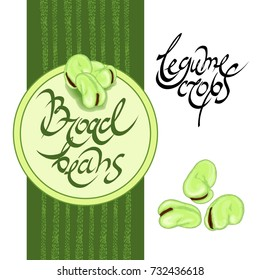 broad beans and legume crops word phrase lettering hand drawn with green beans vector ilustration on green and white background