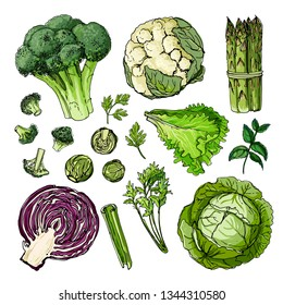 Broccoli, cauliflower, asparagus, lettuce, cabbage, celery, herbs line drawn on a white background. Set of colored vegetables. Fresh food. Vector illustration.