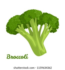 Broccoli isolated on white background. Vector illustration of a fresh vegetable in a flat style.