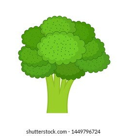 Broccoli on a white background. Vector illustration