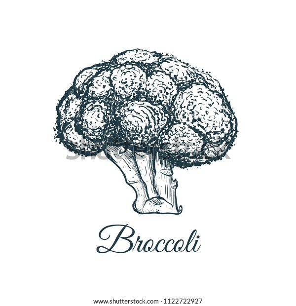 broccoli sketch drawing broccoli vector illustration stock vector royalty free 1122722927 https www shutterstock com image vector broccoli sketch drawing vector illustration 1122722927