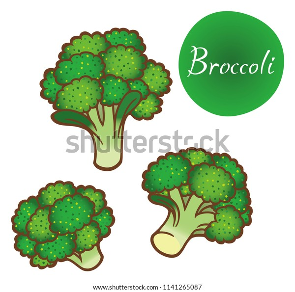 broccoli vector illustration stock vector royalty free 1141265087 https www shutterstock com image vector broccoli vector illustration 1141265087